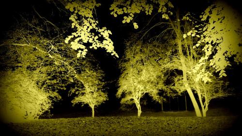 Jesienny poranek w parku 3