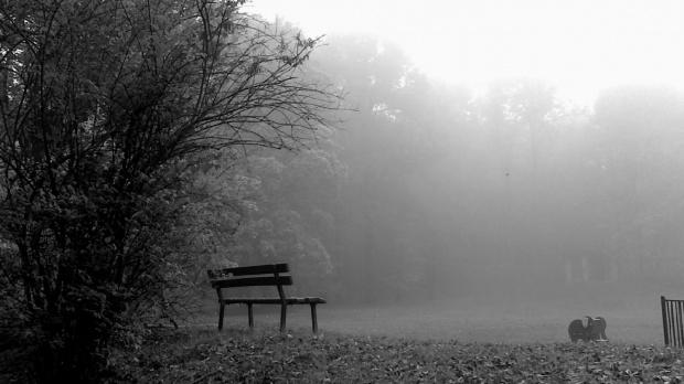 Jesienny poranek w parku 2