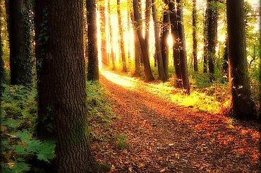 Park Młodzieżowy w Świdnicy #DolnyŚląsk #drzewa #jesień #park #Świdnica #ParkMłodzieżowyWŚwidnicy
