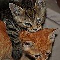 #Kociaki #koty #kotki