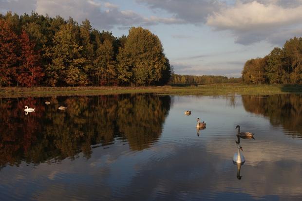 """ostatnio nie mam czasu, aby zajrzeć, co u """"moich"""" łabędzich rodzin, więc wspominki, ale na czasie :) #jesień #łabędzie"""