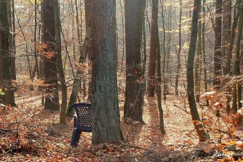 Co można spotkać jesienią w lesie #jesień #las