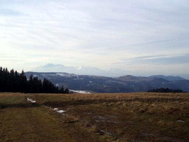 Tatry spod Ruskiego Wierchu #góry #beskidy #BeskidSądecki #RuskiWierch #obidza #rozdziela #BiałaWoda