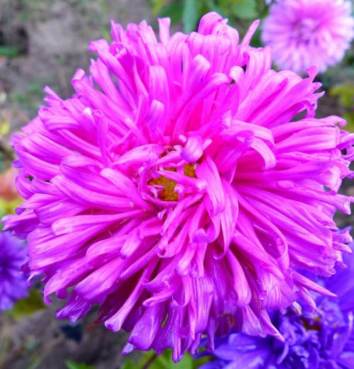 asdter #kwiaty
