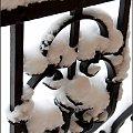 Zasypało na biało :) #zima #śnieg