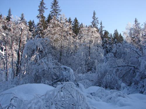 #las #mróz #zima