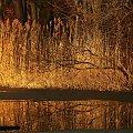 Przedwiośnie ... #jezioro #trawy #drzewa #przedwiośnie