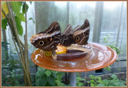 Wyspa Mainau-wyspa kwiatów.W pawilonie botanicznym mieszkają także motyle.Trudno robić tam zdjecia .obiektyw bez przerwy trzeba czyścić.. #przyroda #kwiaty