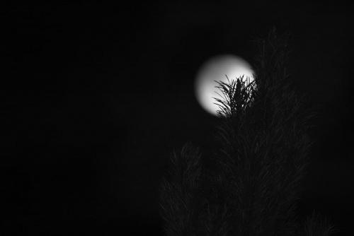 #noc #księżyc #ogród