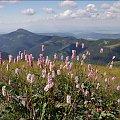 #Tatry #TatryZachodnie #góry #Lipiec2013
