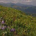 Tatry Zachodnie - ciąg dalszy widoków z Ornaku #góry #Lipiec2014 #Ornak #Tatry #TatryZachodnie