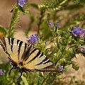 #motyle #natura #przyroda #Lipiec2014