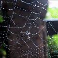 pajęczynka ... #jesień #ogród #pajęczyny