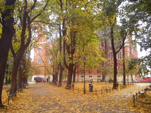 Collegium Novum jesienią
