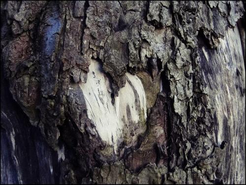 Przyroda kocha Nas wszystkich - nie zawiedźmy jej nigdy ...