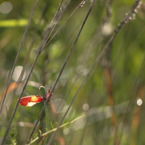 lato z zapasów i dodatek: http://www.youtube.com/watch?v=KDUA_JKuY8w (polecam- piękne) #natura #lato