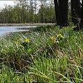 #Bug #pies #sznaucer #zalew #Zibi