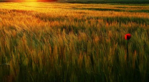 mak...o zachodzie słońca #ZachodySłonca #pola