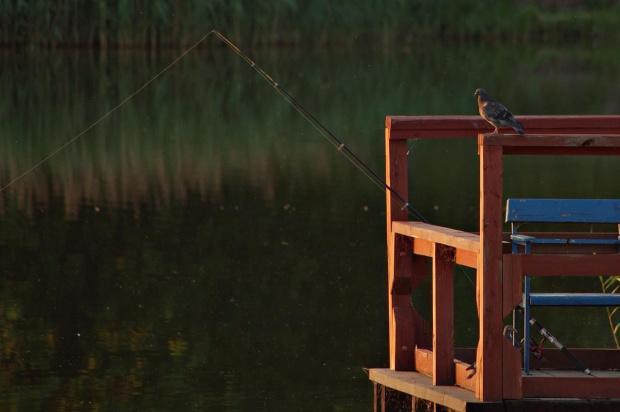 #gołąb #wędkowanie #zalew