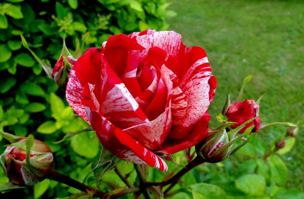 Moja najpiękniejsza #kwiatki