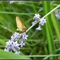 przyroda #motyle