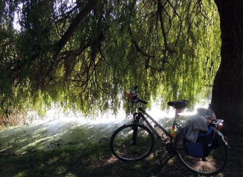 u sasiadow ....113 km rowerkiem