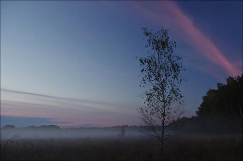 wieczorne mgły