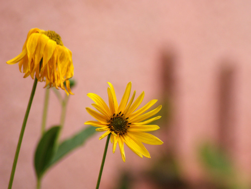 jesienny kwiatuszek ...