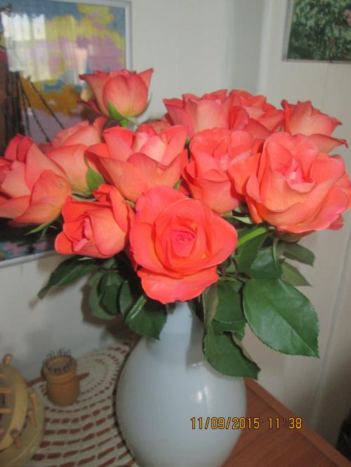 wrześniowe róże.